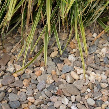 Boerengrind 4 - 16mm (aangelegd)