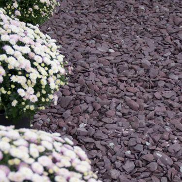 Flat Pebbles paars aangelegd in siertuin