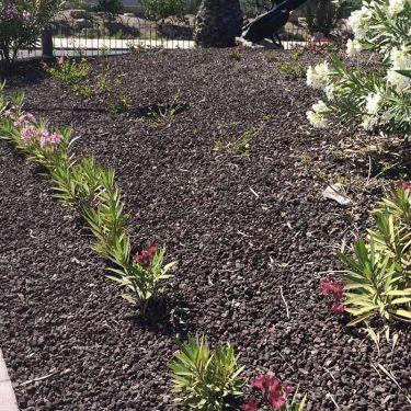 Lava split toegepast als siersplit in de tuin