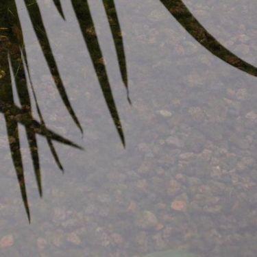 Lava split aangelegd vijver