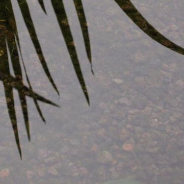 Lavasplit vijver