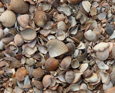 Isolatie met schelpen: voordelig, handig én duurzaam!